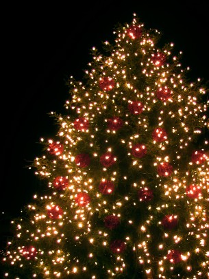 christmas_christmas_tree_lichterkette